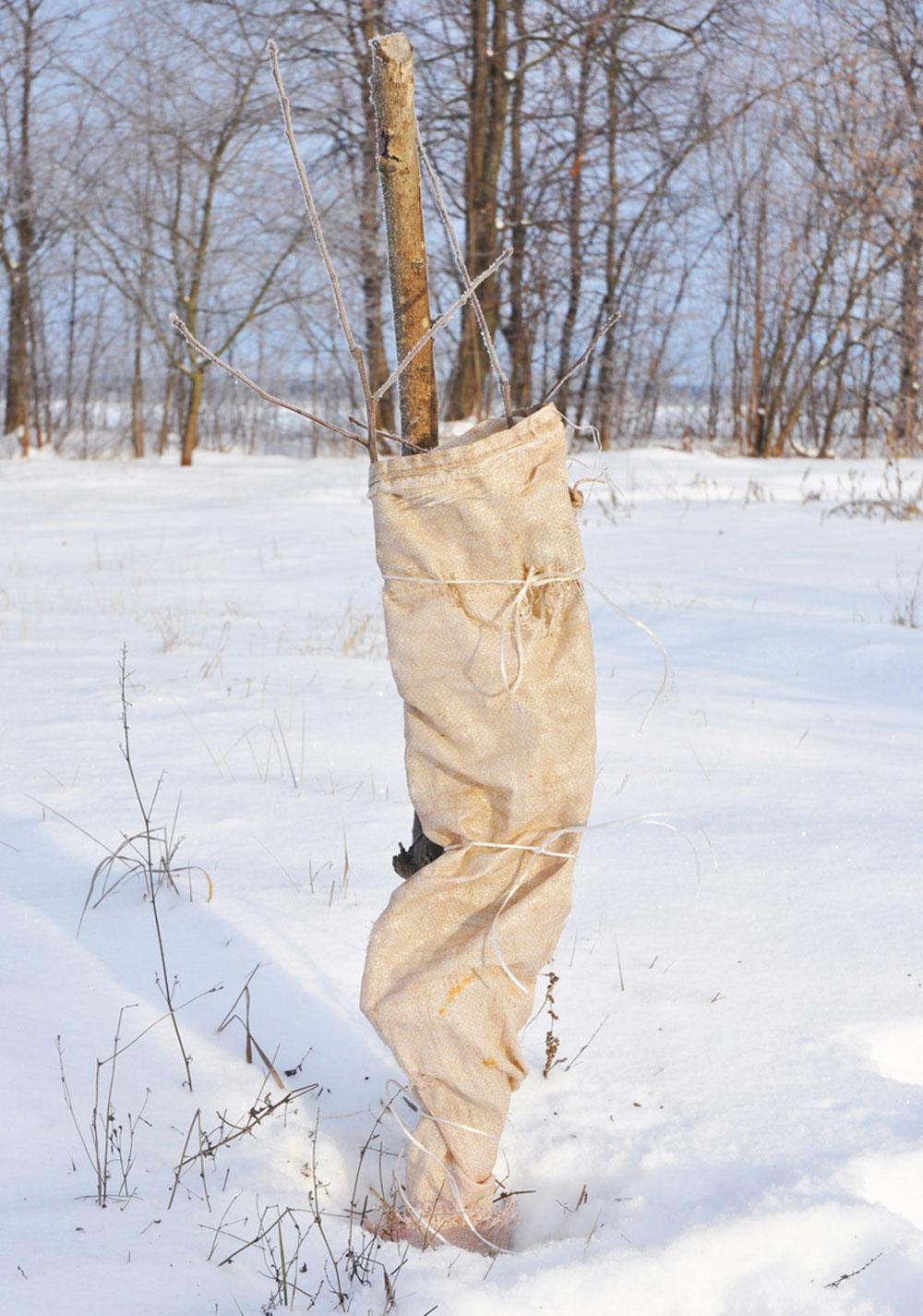 ochrana stromu pred poškodením živočíchmi