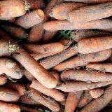 skladovanie mrkvy