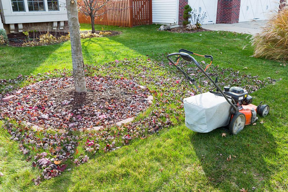 opadané listy v záhrade