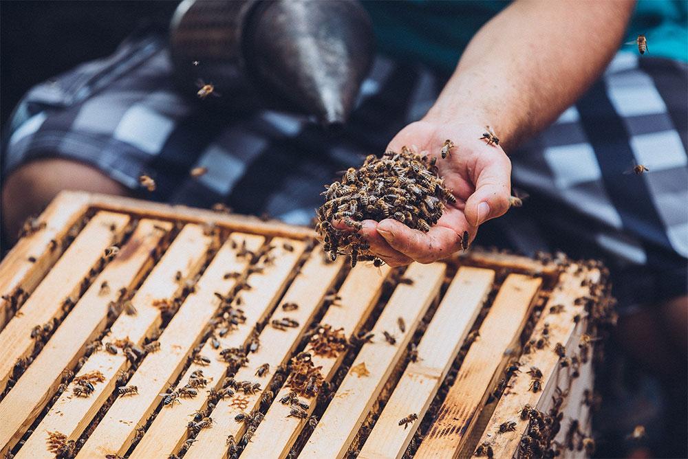 chov a starostlivosť o včely