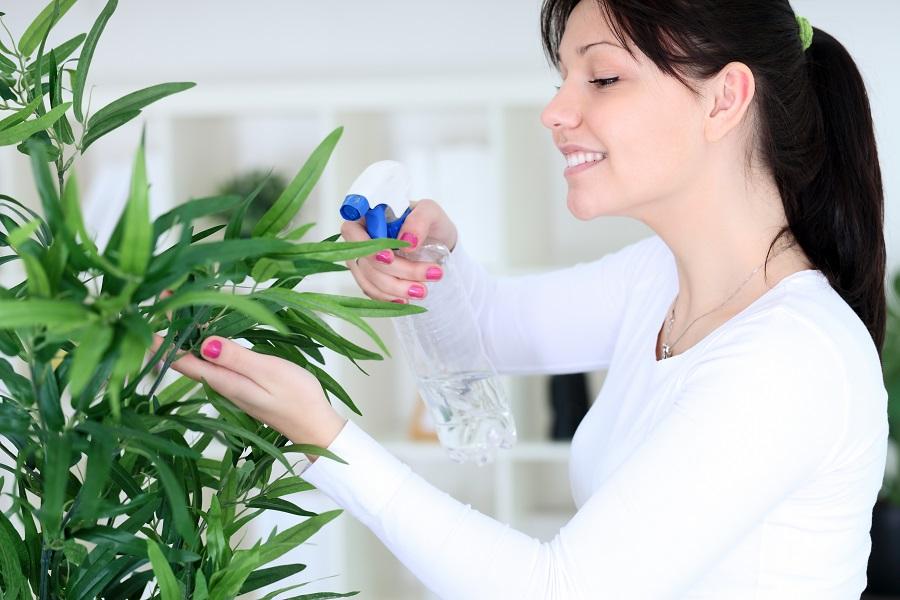 Zvlhčovanie izbových rastlín