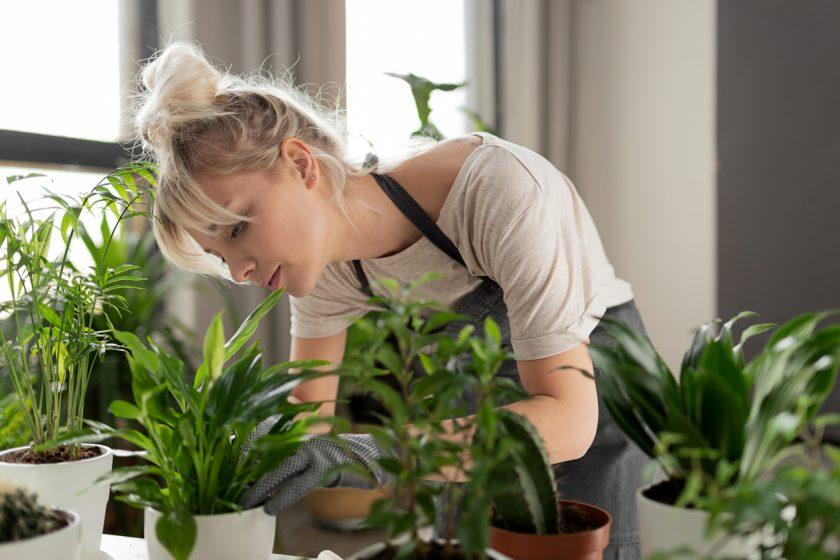 starostlivosť o interiérové rastliny v zime