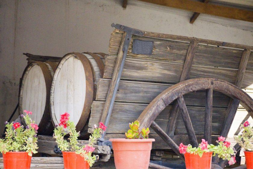 zazimované rastliny v pivnici