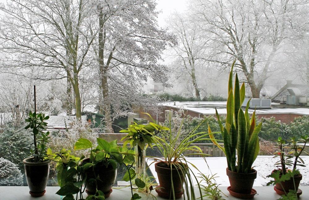 zazimované rastliny v zimnej záhrade