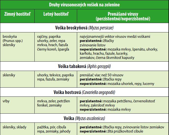 Druhy vírusonosných vošiek na zelenine