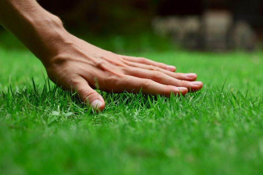 starostlivosť o trávnik na jar