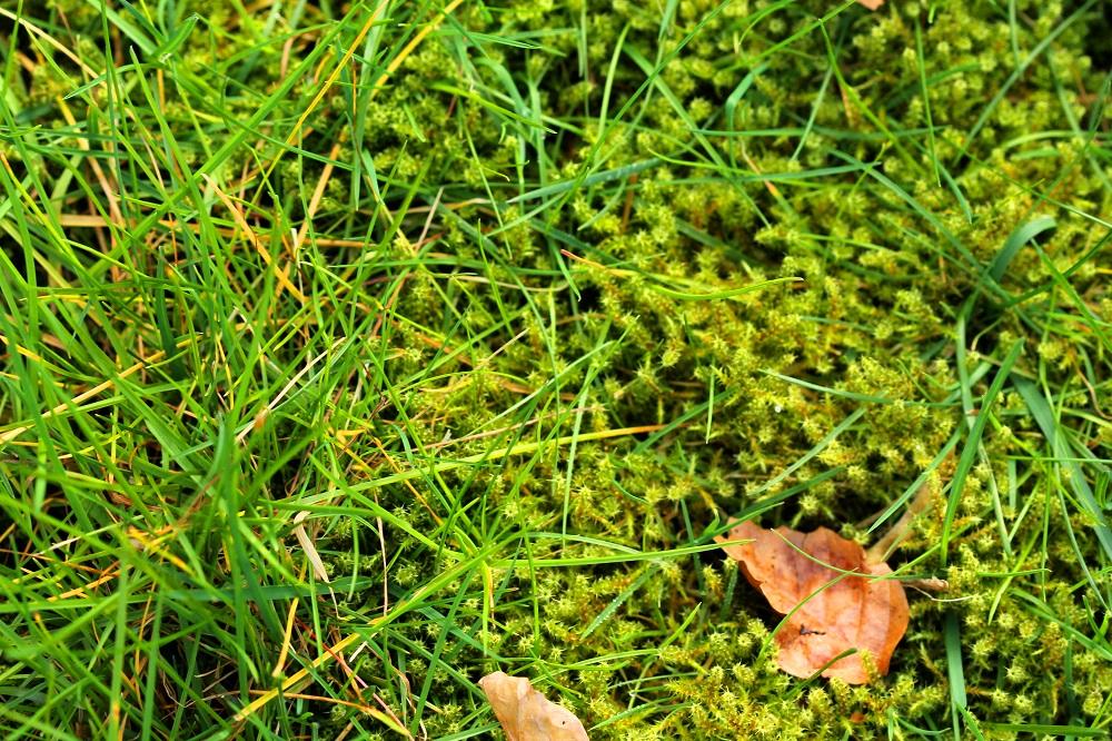 mach v trávniku