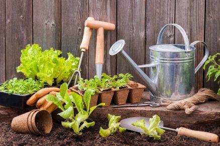 zakladanie zeleninovej záhrady