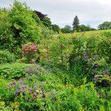 prírodná záhrada