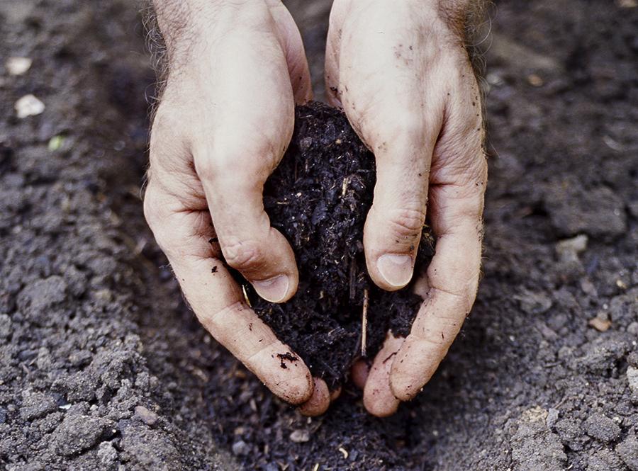 zasypanie výsevu kompostom