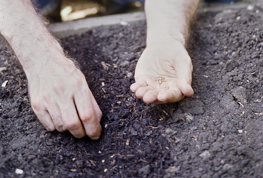 vysievanie semienok