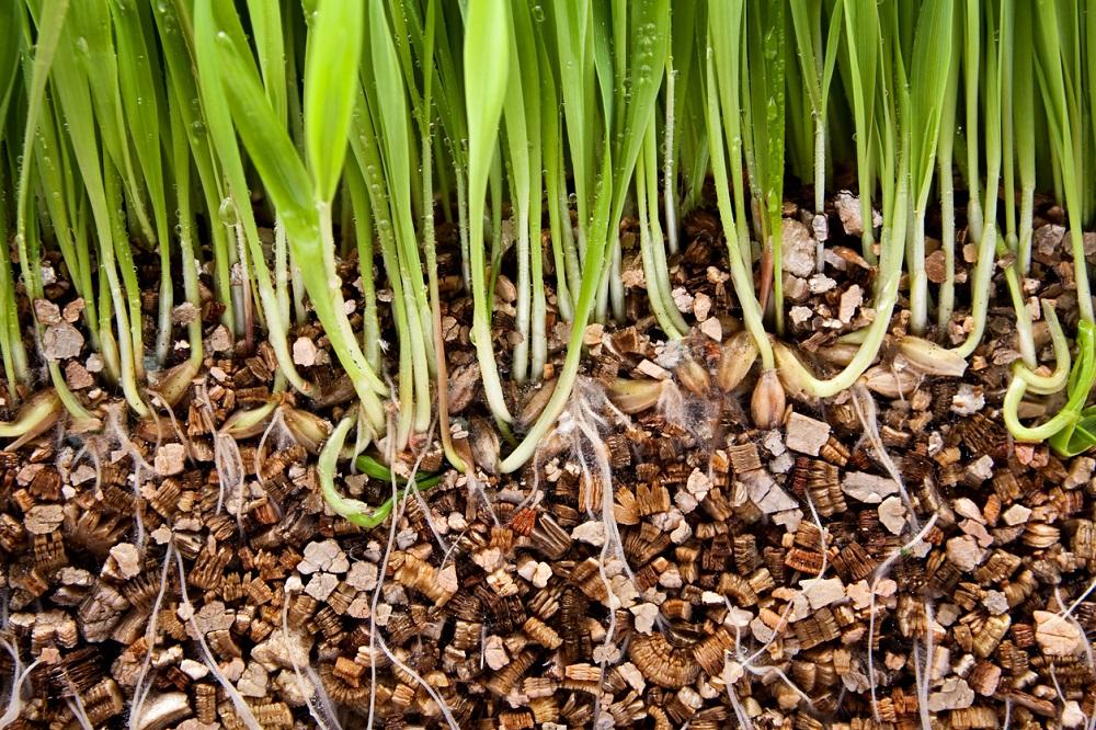 vermikulit v pôde