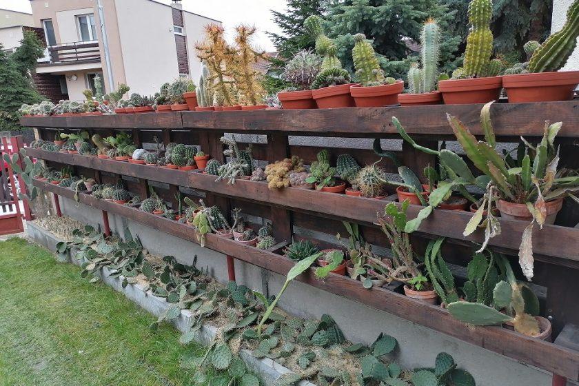 Stojan na kaktusy z paliet