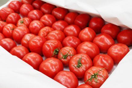 skladovanie rajčiakov