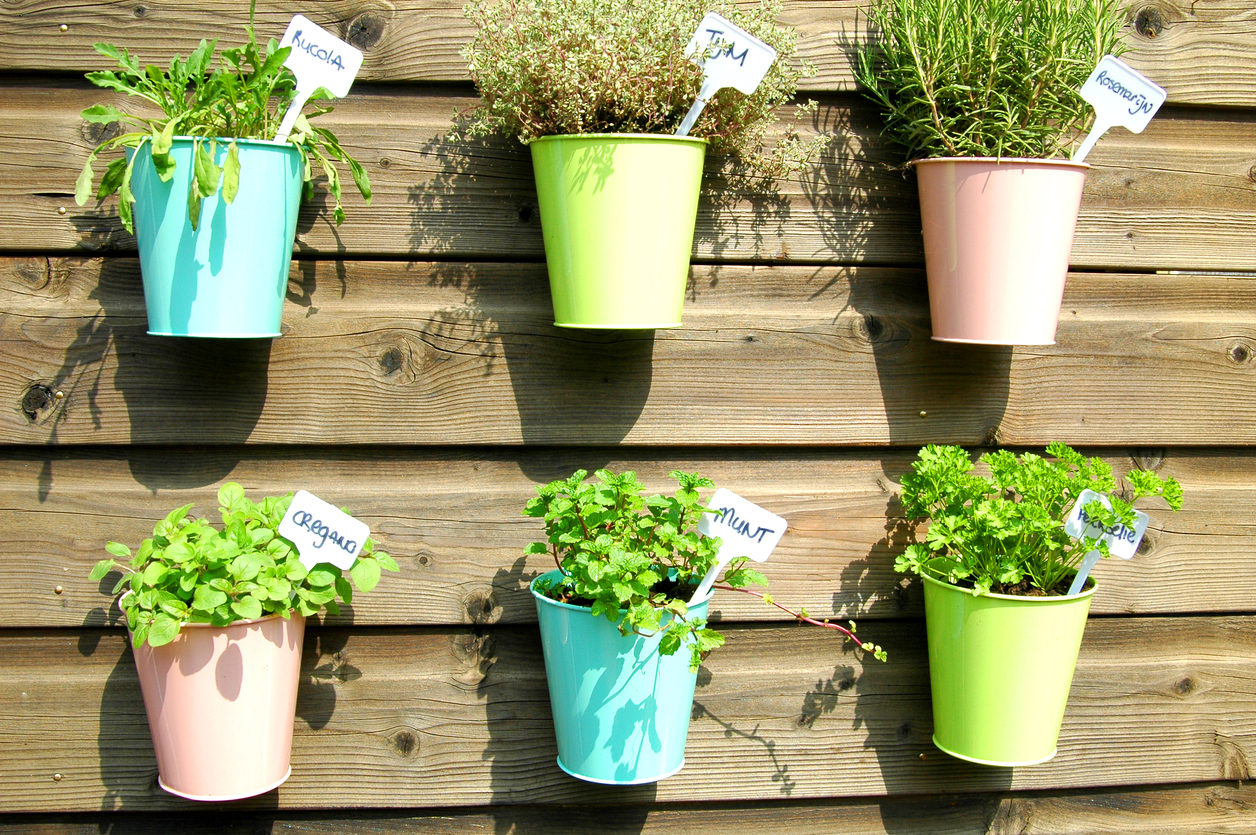 vertikálna bylinková záhradka