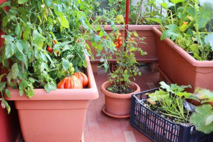pestovanie kontajnerových rastlín