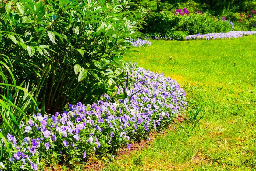 Letné práce v záhrade záhon