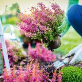 sadenie vresov