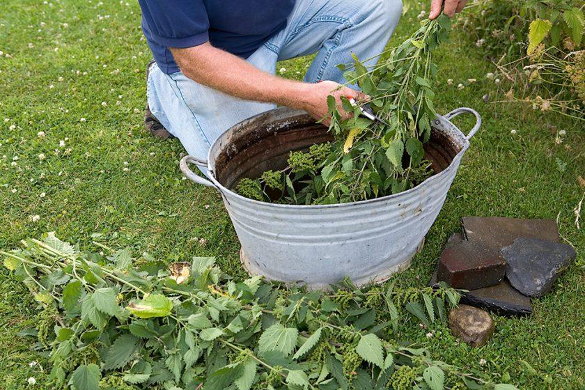 príprava hnojiva z pŕhľavy