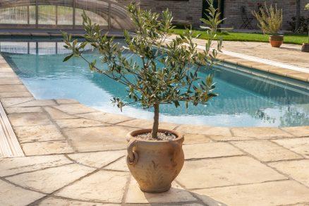Pieskovcová dlažba pri bazéne antický kvetináč s rastlinou