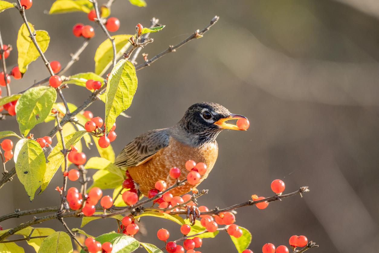 vtáky v záhrade
