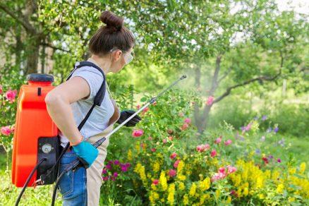 postrek proti letným škodcom v záhrade