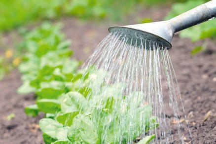 zavlažovanie úrody
