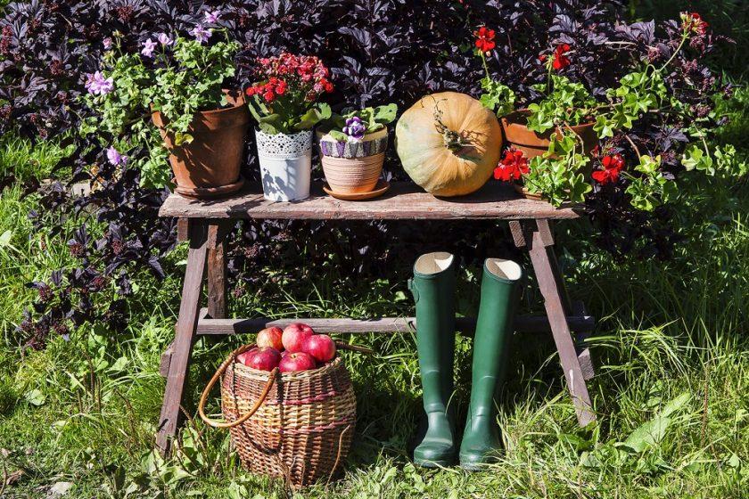 Plody jesennej záhrady
