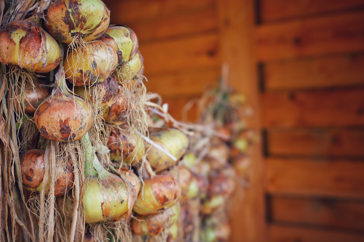 Sušenie cibule
