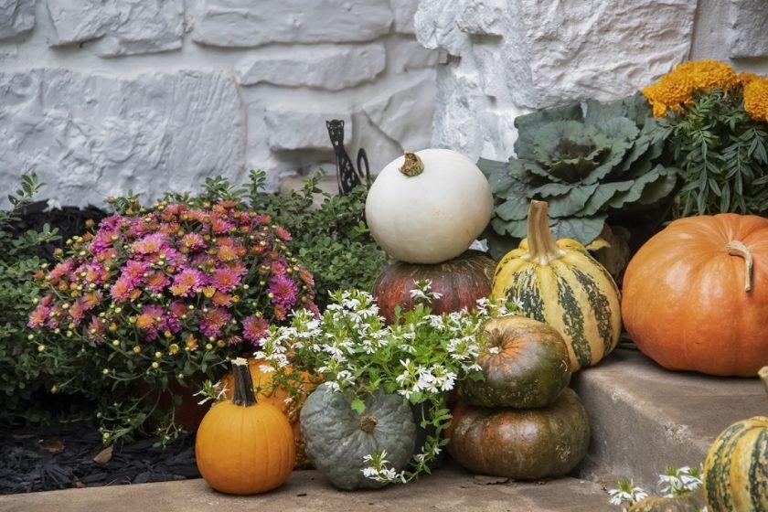 jesenná záhrada s kvetinami a okrasnými tekvicami