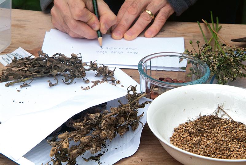 Fermentácia semienok