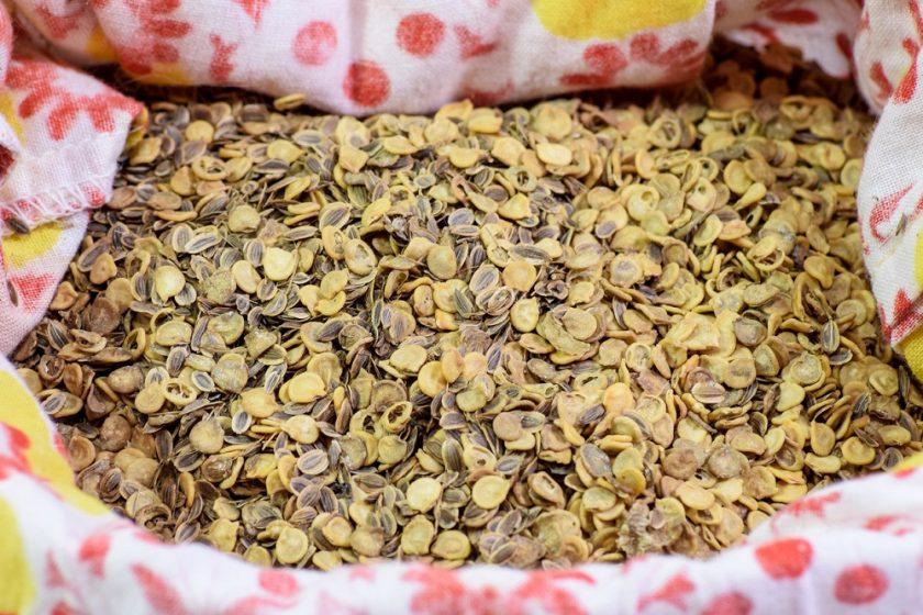 skladovanie semienok rajčín