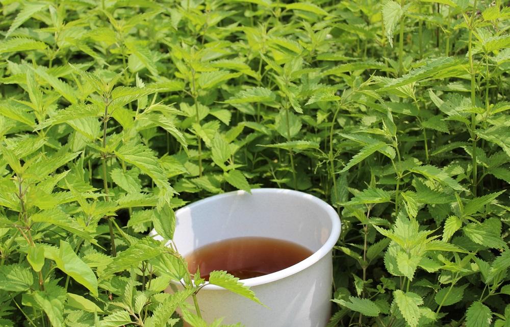 Čaj z čerstvej žihľavy