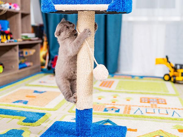 moja mačička striekať