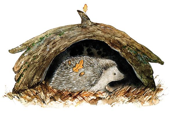 úkryt pre ježka