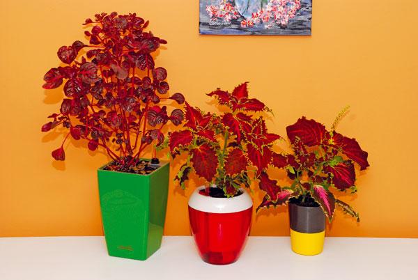 Kvety v interiéri