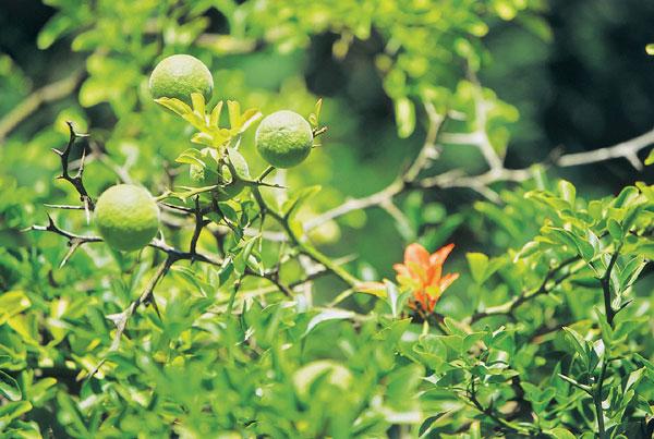 08 arboretum big image
