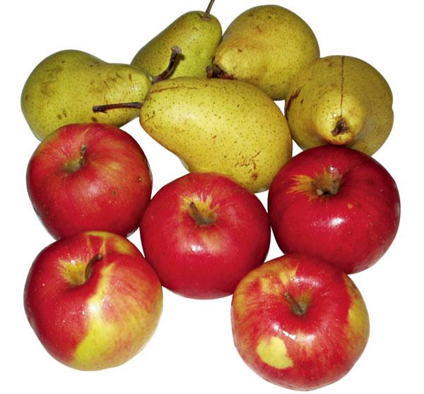 jablko hruska big image