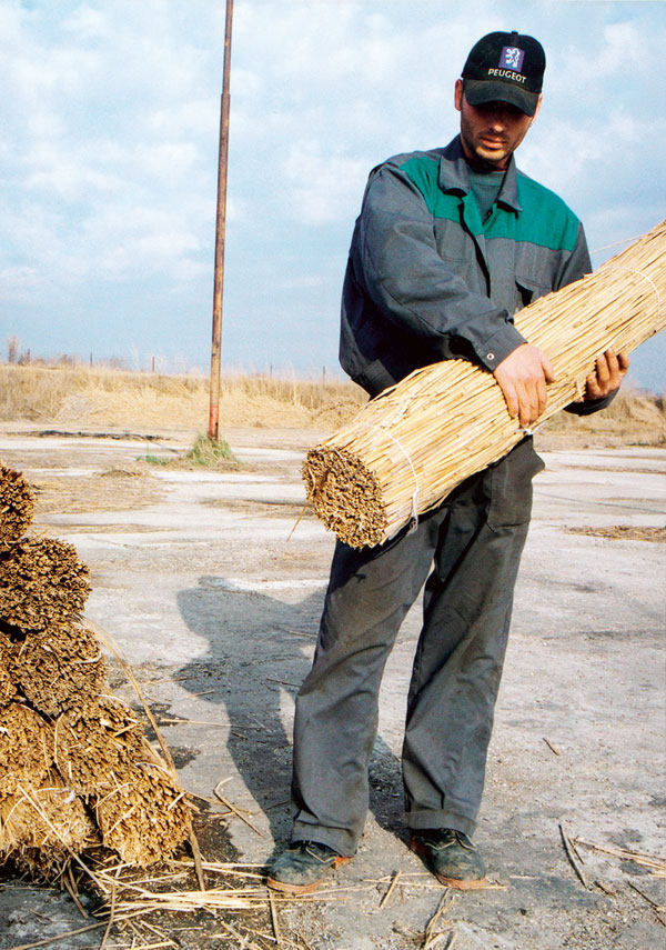 Snopy trstiny pripravené na pokrývanie strechy