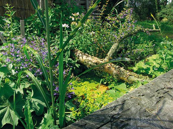 vaňa a záhrada