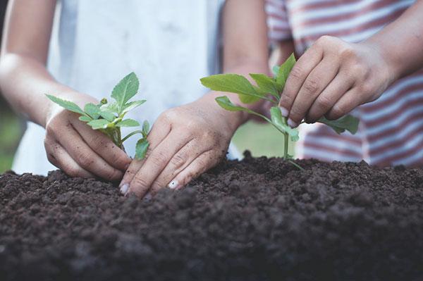 pestovanie priesad