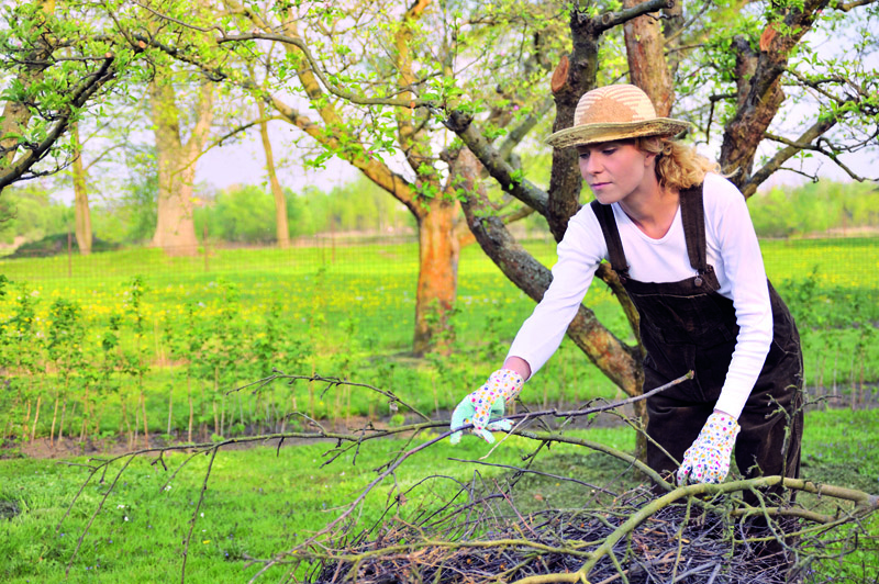 Ako zazimovať záhradu