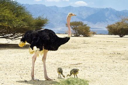 Super obrovské čierne vtáky