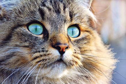 Mladá horúca mačička pics