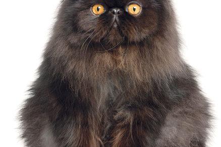 Starý horúci čierny mačička