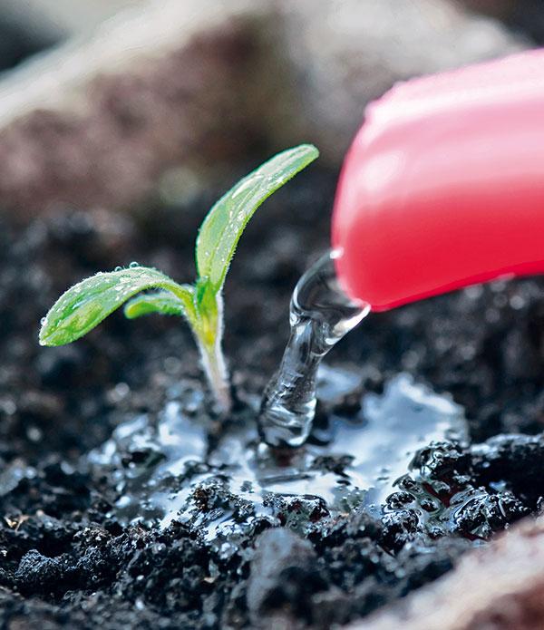Po výseve zavlažujeme opatrne, aby sa semená nevyplavovali. Mladé rastlinky môžete aj kropiť vodou z rozprašovača.  (foto: thinkstock.com)