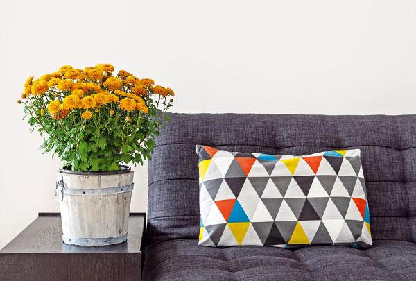 Chryzantéma  (Chrysanthemum morifolium)