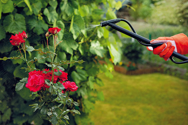 ruže a ochrana