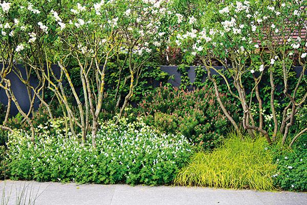 tienistá záhrada