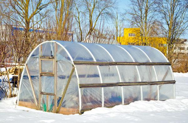 Aj vo fóliovníku možno vzime pestovať zeleninu. Výbornou pomôckou je zvierací hnoj.